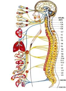 coloana vertebrala si bolile
