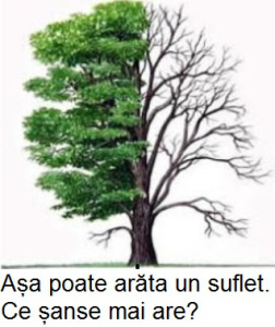 copac1