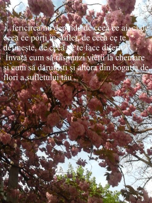 fericirea-din-florile-sufletului[1]